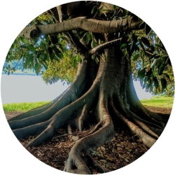 Photograph of a tree and roots to represent grounding and growth of doulas during the Retreat.